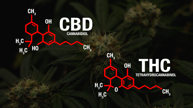 THC and CBD: Making Smart, Practical Choices