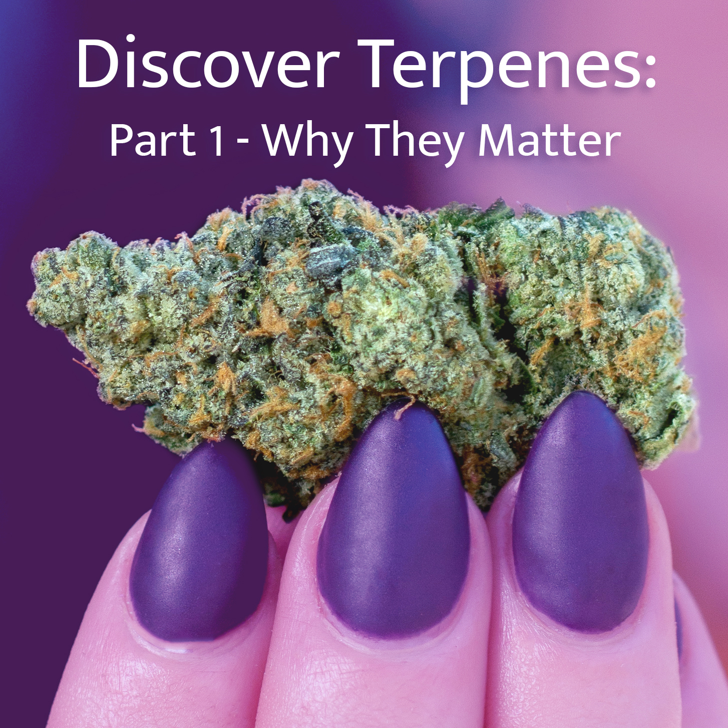 Discover Terpenes: Part 1 – Why They Matter