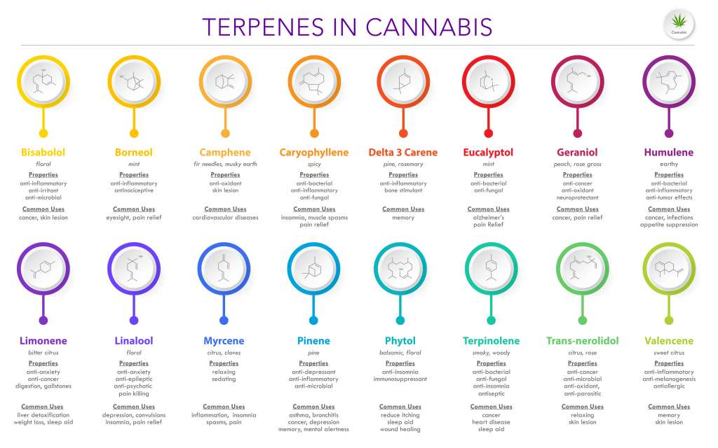 Here are some of the most common terpenes found in cannabis.