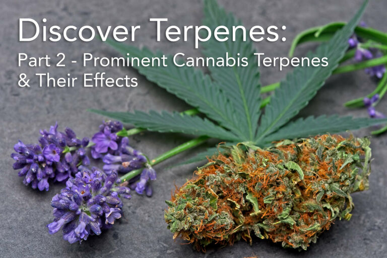 Discover Terpenes: Part 2 – Prominent Cannabis Terpenes & Their Effects