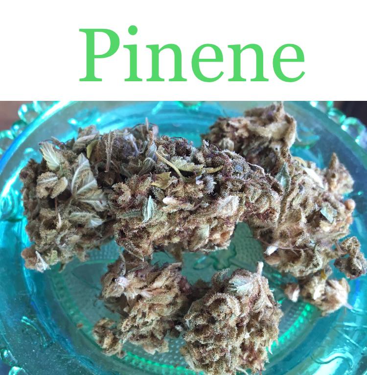 Blue Dream is high in the cannabis terpene pinene.