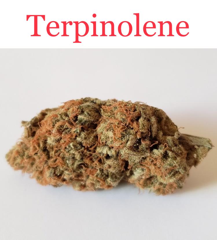 This Super Lemon Haze is rich in terpinolene.