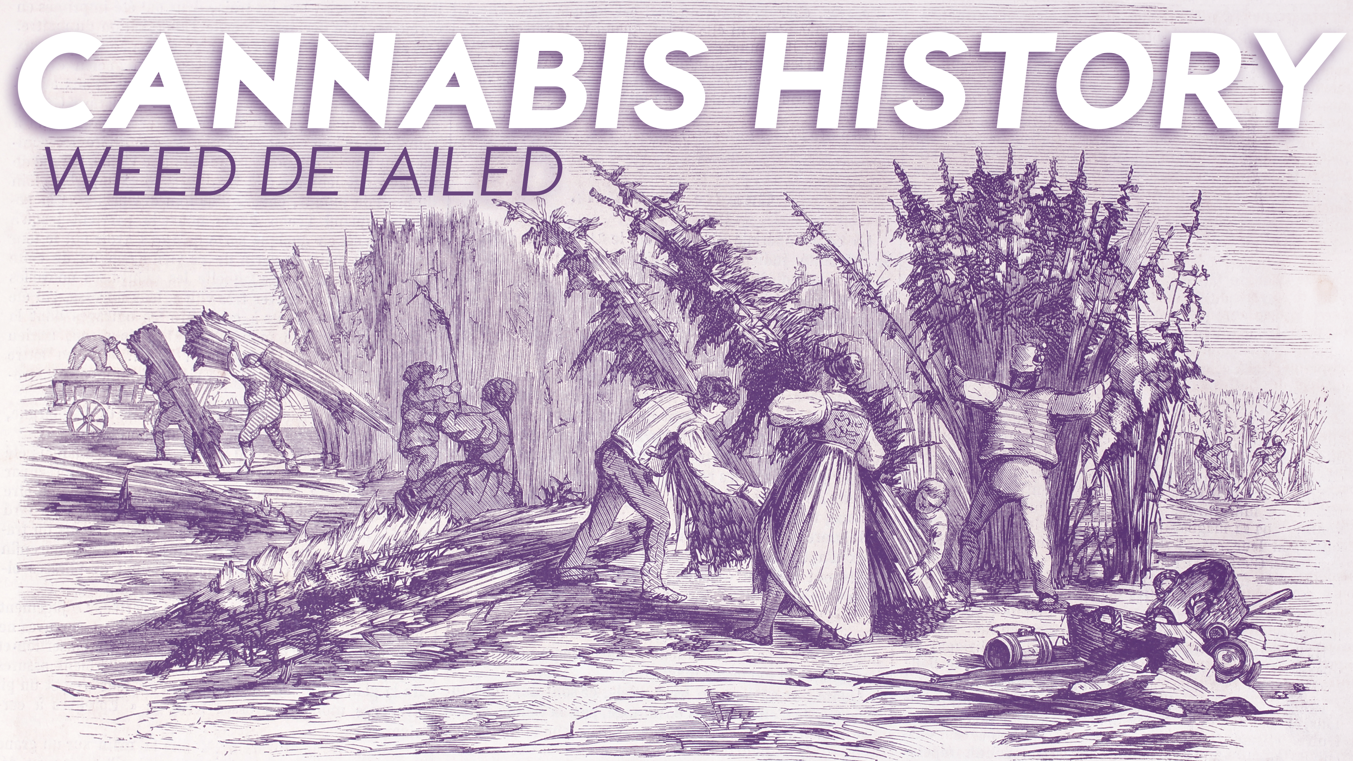 Cannabis History: Weed Detailed