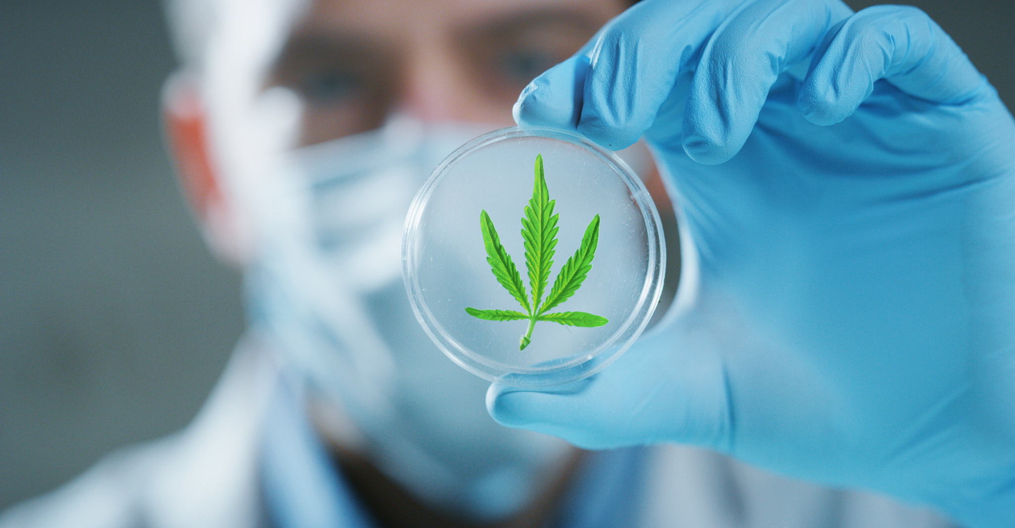 Cannabis & the Coronavirus – Weed's Unexpected Role in Surviving the Pandemic