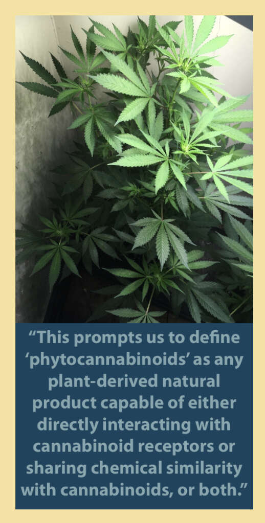Phytocannabinoids are produced by plants.