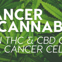 Cancer & Cannabis: Can THC & CBD Oils Kill Cancer Cells?