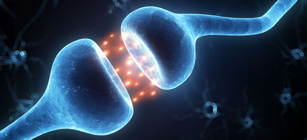 Cellular signaling is overseen by the endocannabinoid system.