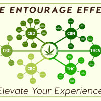 The Entourage Effect: Elevate Your Experience
