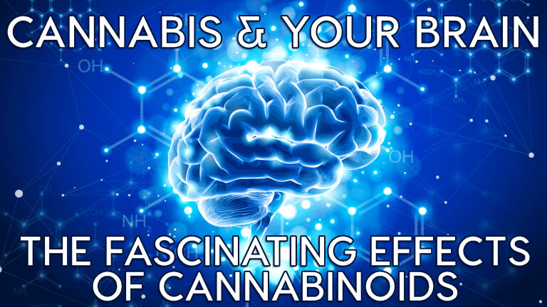 Cannabis & Your Brain: The Fascinating Effects of Cannabinoids