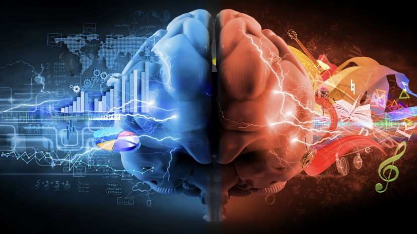 The two halves of the brain respond to differing stimuli.