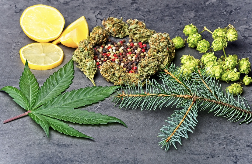 Terpenes are responsible for the varying scents & tastes of cannabis strains.