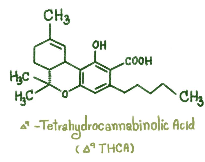 THCA, an acid cannabinoid.